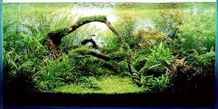 Aquascape Takashi Amano Aquascapes