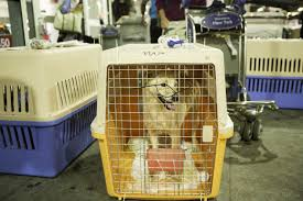 Washington traveling with pets images Animal rescue centers want you to be a flight volunteer the jpg