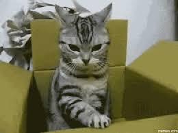 Mad Cat Memes - mad cat meme good