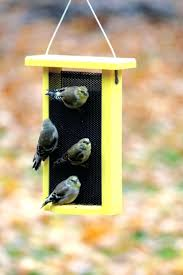 hummingbird house plans window box bird feeder protect your bird house from predators