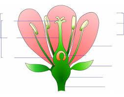 parts of a flower purposegames
