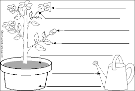 label the flowering plant in english printout enchantedlearning com