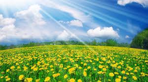 image of spring flowers flower wallpaper in spring media file pixelstalk net