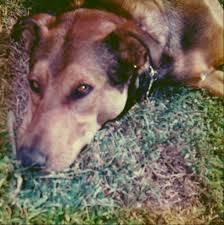 dear labby why does my dog bury things slimdoggy
