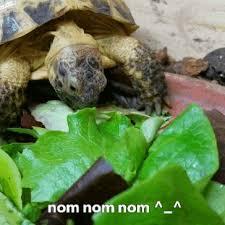 Tortoise Meme - tortoises and turtles tumblr