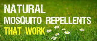 natural mosquito repellents natural mosquito repellents that work mosquitofixes
