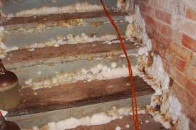 cleaning basement mold and mildew orange mold