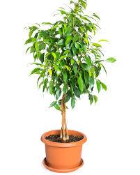 indoor plants images breathe easier with these 8 indoor plants u2014salad menu