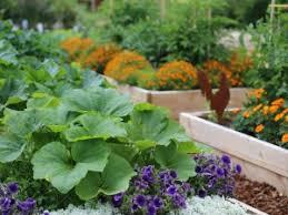 gardening tips in hindi kitchen garden ideas u0026 tips simple