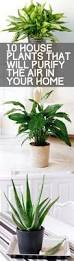 8 Houseplants That Can Survive by 10 House Plants That Will Purify The Air In Your Home Air
