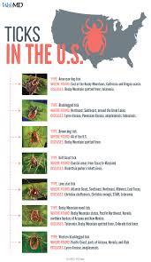 Rocky Mountain States Map Faq Tick Borne Diseases