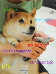Doge Meme - media made my day doge meme very popular much wow so trend