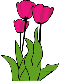 tulip cultivation clipart clipground