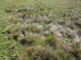 planting native grasses california u0027s coastal prairies prairie described