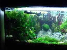 10 gallon planted tank led lighting how to set up a low tech planted aquarium aquariadise