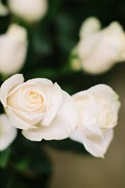 Wedding Flowers Budget The 25 Best Inexpensive Wedding Flowers Ideas On Pinterest