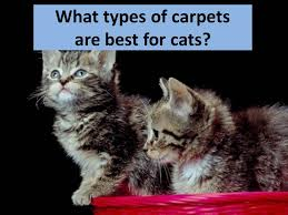what types of carpets are best for cats the flooring