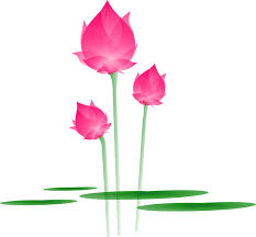 Lotus Flower Bloom - free vector graphic lotus flower blossom bloom free image on
