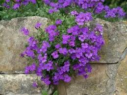 Best Plants For Rock Gardens Plants For Rock Garden What Are Plants For Rock Gardens Photo