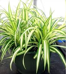 houseplants that need little light indoor plant no sun portalsmo club