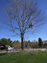 tree removal trimming scaping stump royal tree care