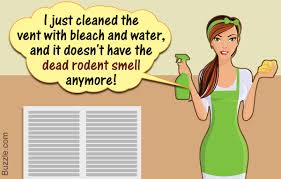 how to get rid of dead rodent smell 5 methods that actually work