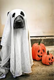 boxer halloween costume for dog 9 genuinely terrifying halloween dog costumes metro news