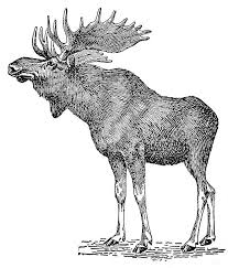 moose graphics free download clip art free clip art on