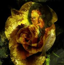 11 best a wilted rose images on pinterest flowers angel and