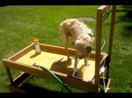 diy dog grooming table dog wash station 2 done washing the dog youtube