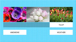 flower pro flowerworld learn flower pro android apps on play