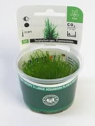 dustin u0027s fishtanks dustin u0027s tips u0026 tricks to keeping a planted