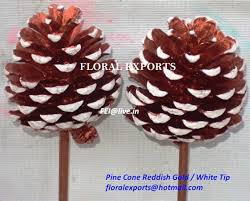 white pine cone pine cone strobus cone palm spear floral exports inc