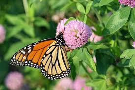 native plants and animals pollinators 101 native pollinators in agriculture
