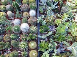 geffray u0027s gardens local nursery crawl