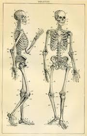 Human Anatomy Textbook Online Skeleton Antique Book Plate Medical Ephemera Human Anatomy