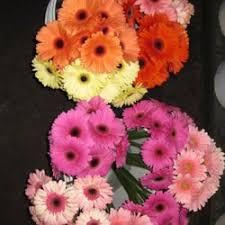 wholesale fresh flowers fresh flowers wholesale 113 photos 60 reviews florists