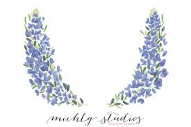 Bluebonnet Flowers - flower clipart bluebonnet png art illustrations creative market