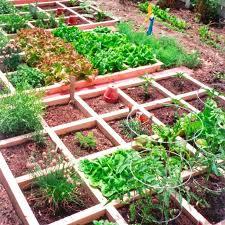 small vegetable garden ideas india square foot garden small