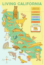 California Wildlife images Living california wildlife map erica sirotich illustration jpg