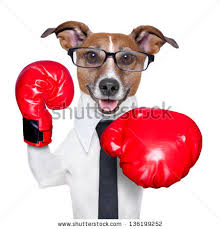 boxer dog in boxing gloves red and white boxer dog stock images royalty free images