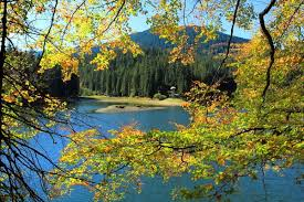 lake trees pond yellow beautiful golden branches mountain view sky