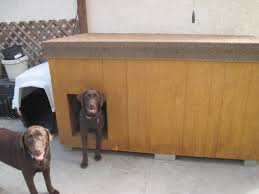 Chocolate Labradors Home made dog house