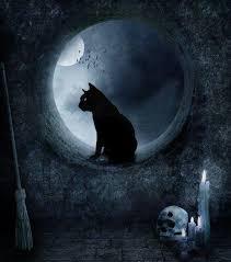 cat moon pesquisa witch cat cat and