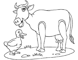 cow coloring pages free gianfreda net