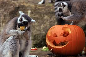 the spirit of halloween scary cute pictures of animals with jack o lanterns