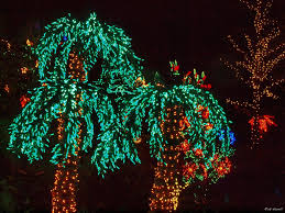 palm tree with christmas lights christmas palm tree 106 best