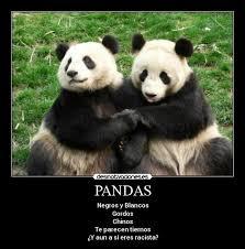 Memes De Pandas - imágenes y carteles de pandas pag 14 desmotivaciones