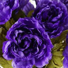 purple roses for sale purple bushes for sale urldircom