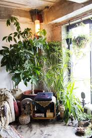Interior Garden Plants by 1111 Best Green Room Images On Pinterest Plants Indoor Plants